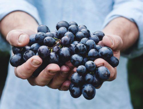 Σεπτέμβριος – Φρούτα και λαχανικά εποχής